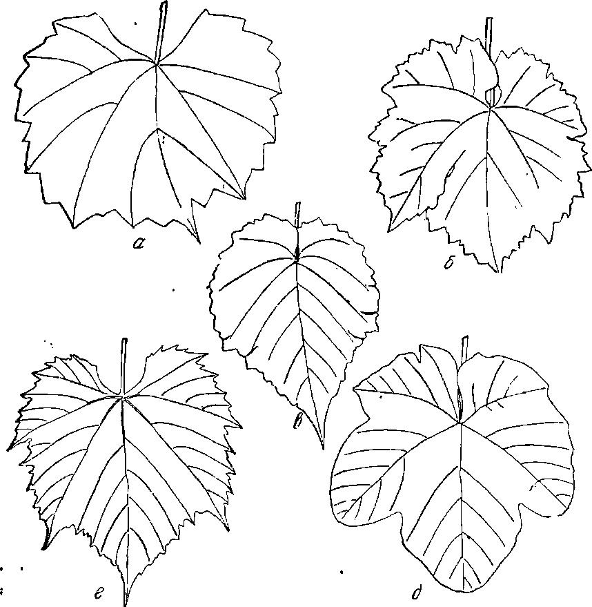 Различные формы листа