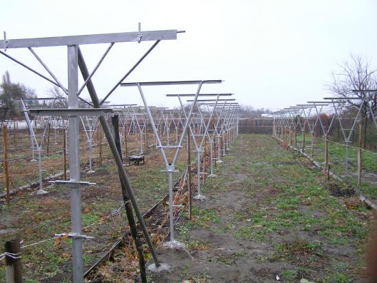 Новый виноградник
