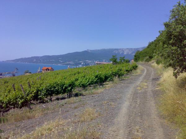 Виноградник Магарач