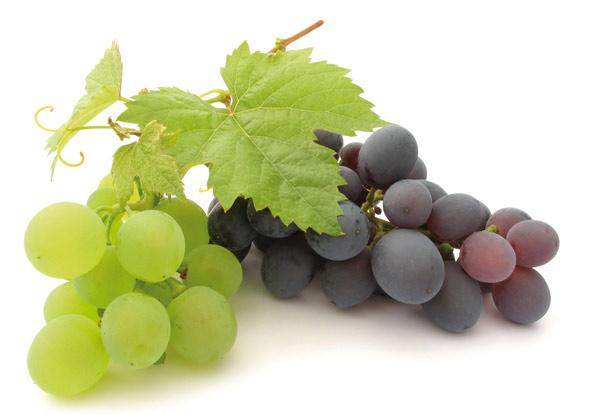 Италия: Производители винограда не питают особых иллюзий относительно нового сезона